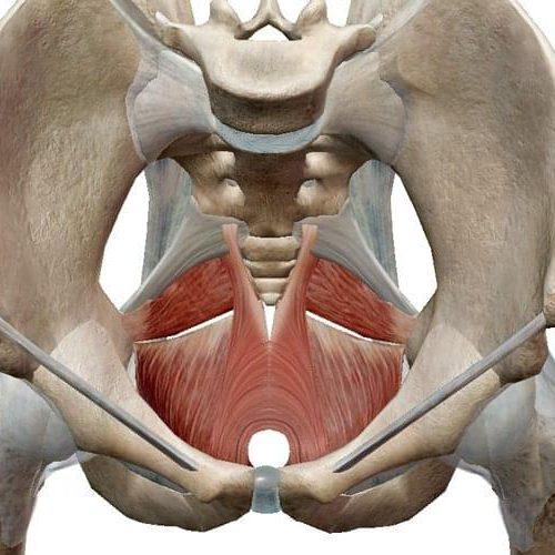Como ejercitar el musculo pc masculino